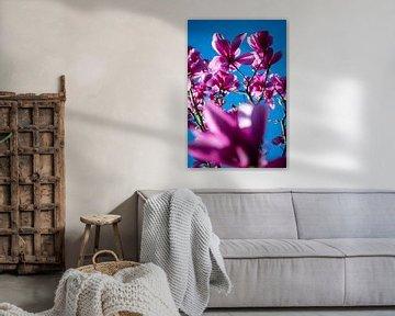 Magnolie gegen blauen Himmel von René van der Horst
