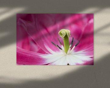 Tulp von Andre Jansen