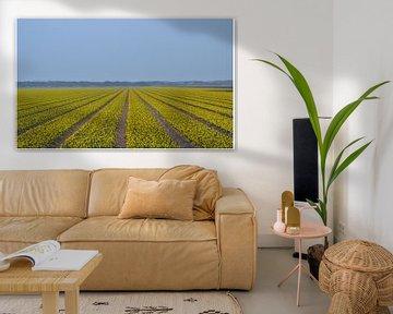 Krokusveld von Hanney Bruijn Fotografie