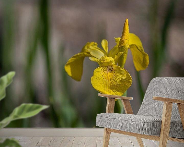 Beispiel fototapete: Gelbe Iris von Ingrid Aanen