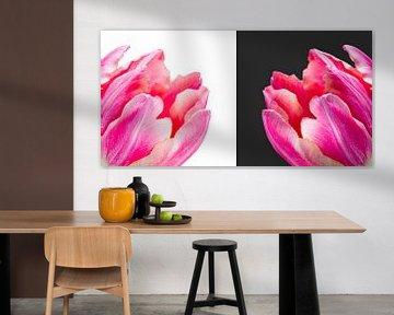 tweeluik van tulpen van Judith Spanbroek-van den Broek