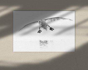 Fröhliche Landung von Fotografie Jeronimo