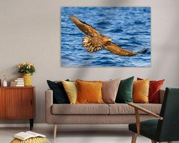 Zeearend jaagt in een fjord van Sjoerd van der Wal