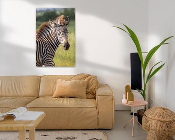 Zebra mit coolem Haarschnitt im Krugerpark, Südafrika von Marijke Arends-Meiring