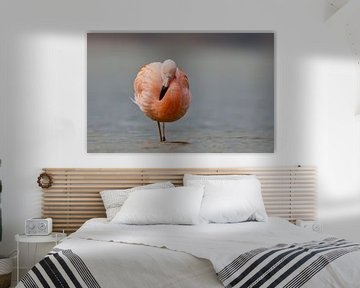 Flamingo in Nederlands water von Menno Schaefer