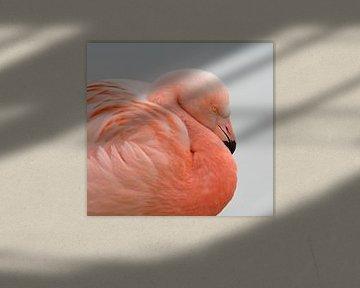 Flamingo portret von Menno Schaefer