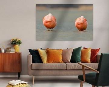 Twee Flamingo's lekker aan het rusten von Menno Schaefer