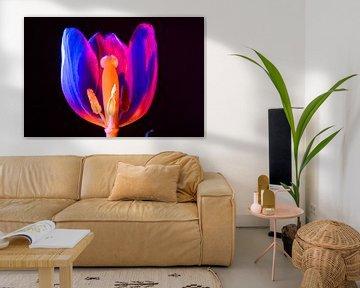 Geisteransicht Tulpe von René van der Horst