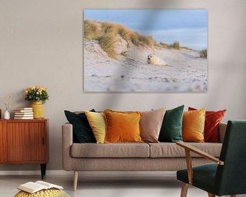 Donzig zeehondje in de duinen von Chris van Riel
