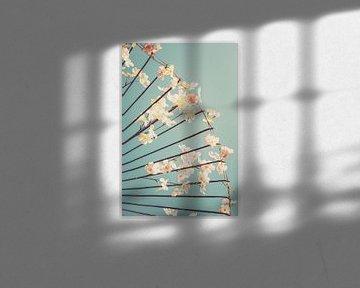 Cherry blossoms in Japan van Pascal Deckarm