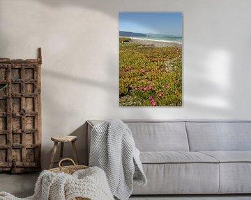 Leithfield Beach / Nieuw - Zeeland