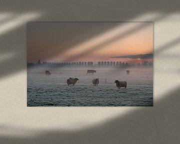 Schapen in ochtendgloren van Moetwil en van Dijk - Fotografie