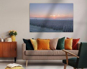Fruitboomgaard von Moetwil en van Dijk - Fotografie