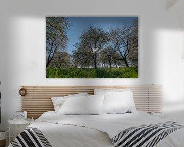 Bloesem kersenbomen von Moetwil en van Dijk - Fotografie