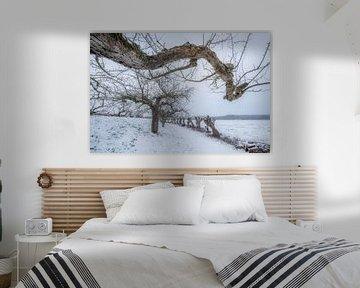 Appelbomen in de winter van Moetwil en van Dijk - Fotografie