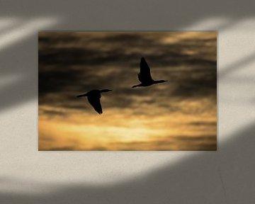 Vogelschattenbild mit Sonnenaufgang.