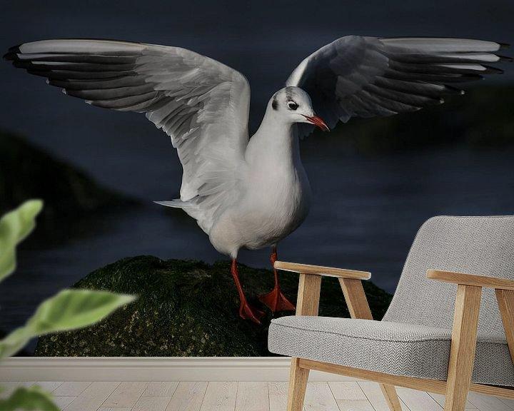 Beispiel fototapete: Lachmöwe von Tim Link