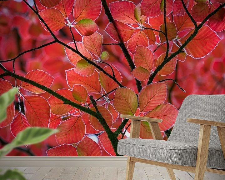 Sfeerimpressie behang: rode bladeren in het voorjaar van Henno Drop
