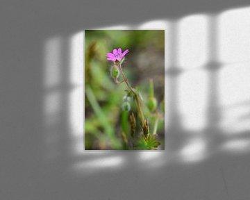 Lila Blüte von Gerard de Zwaan