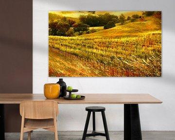 0865 Tuscan wineyard
