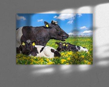 Kuh liegt mit neugeborene Kälbern in der niederländischen Weide mit gelbem Löwenzahn von Ben Schonewille