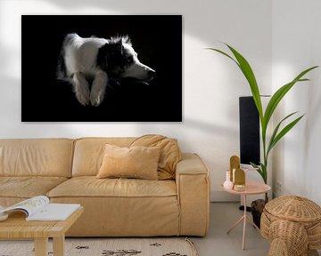 Australian Shepherd von Jana Behr