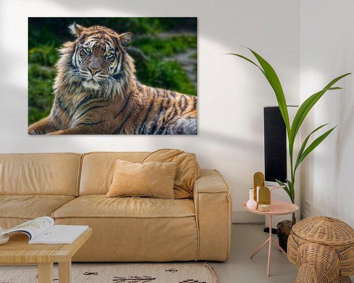 Beispiel: Sumatra-Tiger von Marcel van Balken