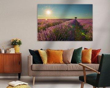 Lavendel zomerzon van Elles Rijsdijk