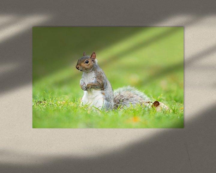 Beispiel: Grijze eekhoorn von Elles Rijsdijk