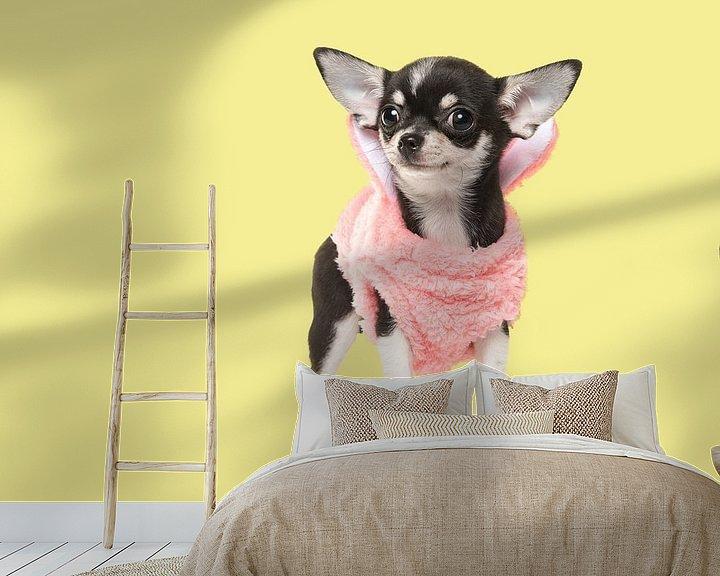 Beispiel fototapete: Chihuahua puppy von Elles Rijsdijk