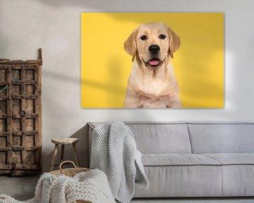 Labrador portret von Elles Rijsdijk