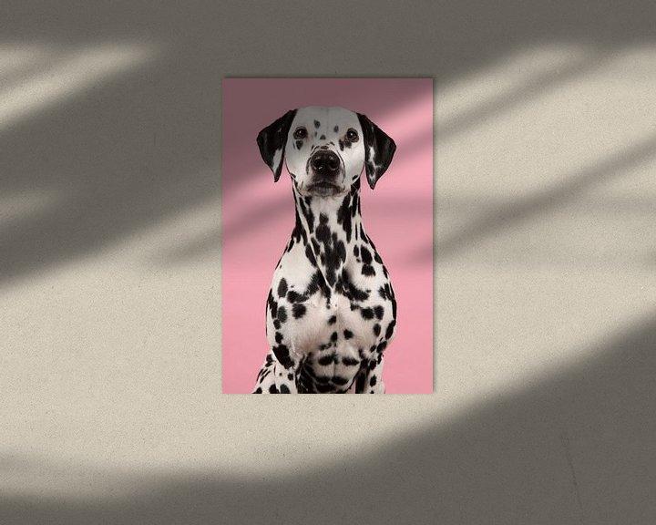 Beispiel: Dalmatiër von Elles Rijsdijk