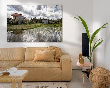 Reisfeldern Ubud - Bali - Indonesia von Dries van Assen