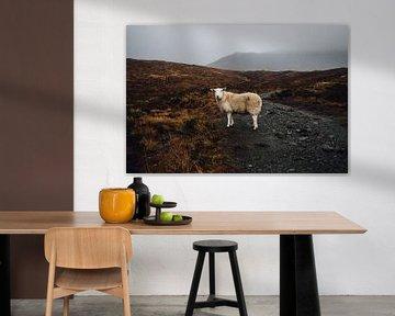Schottland Schaf von Merijn Geurts