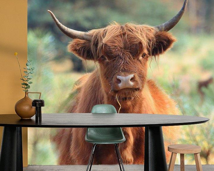Beispiel fototapete: Neugieriges schottisches Hochländer-Kuhporträt von Bobsphotography