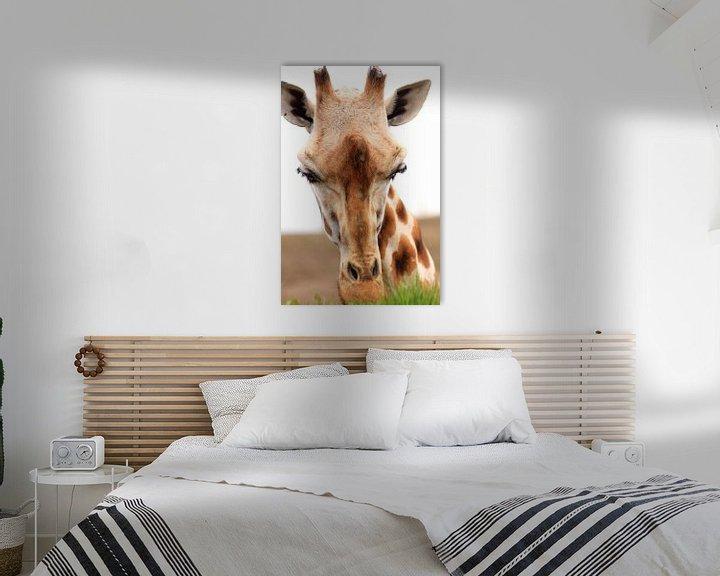 Sfeerimpressie: Gras etende giraf portret van Bobsphotography