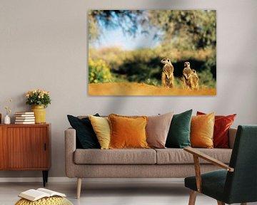 Les suricates au soleil sur Bobsphotography