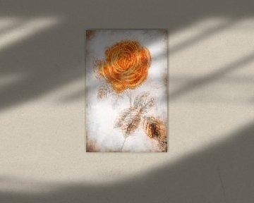 Rose von Dagmar Marina