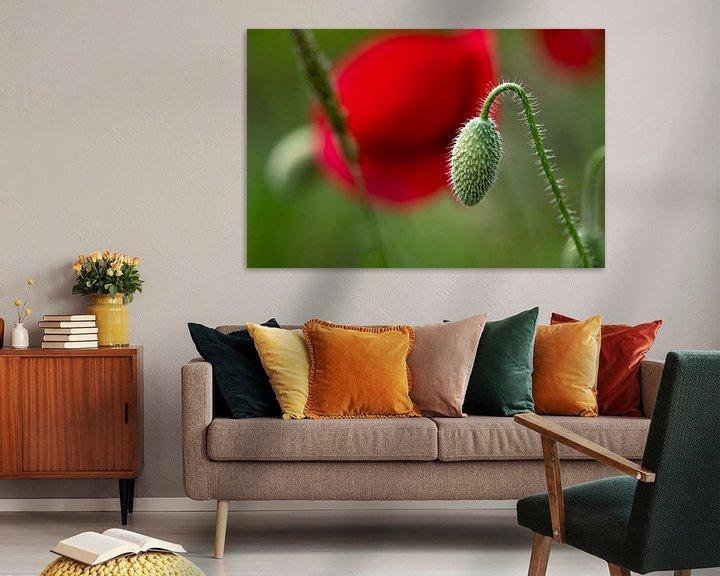 Beispiel: Die Geburt einer Mohnblume von Ingrid Aanen