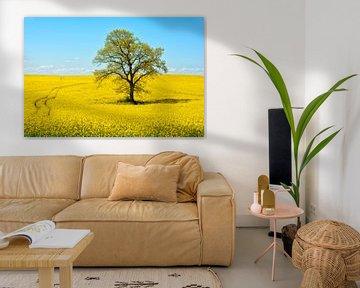 field of bright yellow rape van Joachim G. Pinkawa