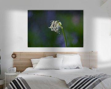witte boshyacint van Tania Perneel