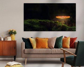 paddenstoel van Christophe Van walleghem