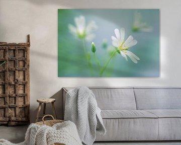 Grote muur, lente bloem von Martin Podt
