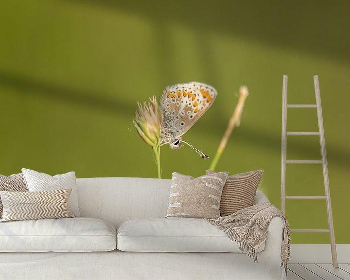 Beispiel fototapete: Schmetterling von Tania Perneel