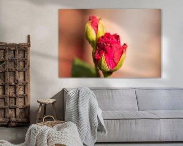 rote rose von Tania Perneel