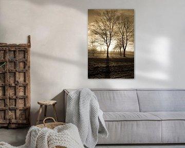 boom bij zonsondergang van eric brouwer