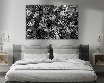 Doppelte Tulpe im Bildroman von Ellinor Creation