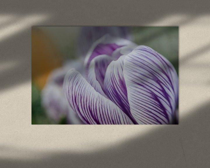 Sfeerimpressie: Close-up van een paarswitte crocus van Gerrit Veldman