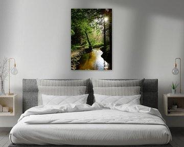 Une forêt avec un ruisseau ensoleillé sur Günter Albers