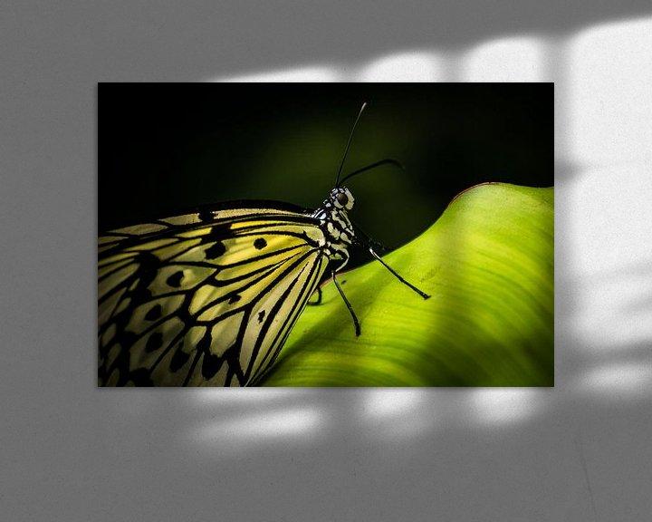 Sfeerimpressie: Vlinder op blad van René van der Horst